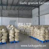 중국 탈수된 마늘 과립