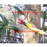 Il taglio e la stretta allungabili di Ilot 6-10FT lungamente raggiungono l'albero Pruner