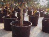 反紫外線75L耐久のプラスチック植木鉢(19.7ガロンボリューム)