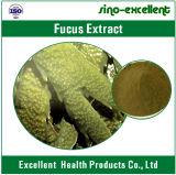 Poudre normale d'extrait de 100% Bladderwrack/extrait de Bladderwrack/Fucus Vesiculosus