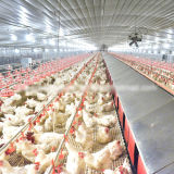 Poultry Farm Houseのための自動Breeder Breeding Equipment