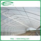 Invernadero plástico del túnel básico para la venta