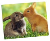 Foto Printed su Aluminum Photo Panels per Cute Animals