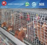 熱販売Btの工場Hタイプ層の家禽のケージ(私の工場を訪問する歓迎)