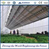 hohe Leistungsfähigkeit 25kw landwirtschaftliches PV-System