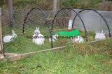 Hexagonal Galvanized Wire Fencing Netting for Rabbit Fences