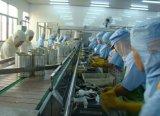 Terminar sardinhas na linha da produção de petróleo