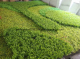 녹색 수직 정원 벽 훈장이 인공적인 잔디에 의하여 설치한다