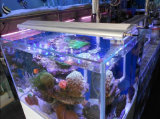 Свет аквариума кораллового рифа объектива СИД White+Blue 24*3W Epistar