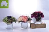 Hydrangea superior de la venta con Rose en el crisol de cristal cuadrado de Eletroplated para Deco casero