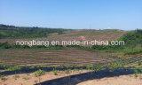 中国の100%年のポリプロピレンによって編まれる沈泥の塀