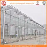 Serra di vetro pomodoro/della patata con il sistema di ventilazione