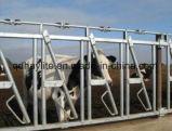 Горячий окунутый гальванизированный Headlock верхнего затвора коровы для сбывания