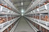 Cage de ferme de poulet de couche de batterie de la grande capacité H de matériel de volaille