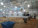 As aves domésticas de aço abrigam o equipamento de exploração agrícola da galinha de China