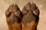 Doggy обтирает Wipes собаки (15CT)