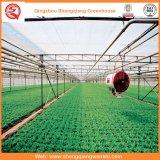 Поликарбонатная парниковая система гидропоники для овощей / цветов / фруктов