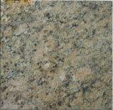 Tuile de Giallo Veneziano Granite et &countertop jaunes de galettes