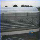 Transparent/Opal White/Blue/Green/Lake Blue/Bronze PC Sheet Greenhouse