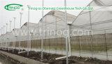 Hydroponics moderno Tomato Greenhouse da vendere