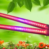SMD2835 Rojo azul Color 1800mm 32W 6FT LED crecen el tubo ligero T8