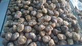 De fabriek levert Poeder van het Uittreksel van de Wortel van Maca van het Poeder Maca van 100% het Organische