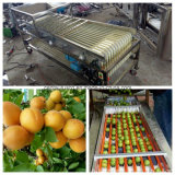 Stailess Steel Fruit Apple Sorting/Grading Machine with Best Price