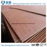 madera contrachapada de 9mm/17m m Bintangor/Okoume/Pine/Bich para los muebles