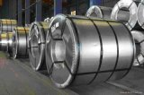 DIP caldo Galvanized Coils Metal Steel Sheet in Coil