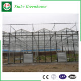 Sale Vegetable를 위한 유럽 Standard Glass Commercial Greenhouse