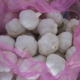 4.5cm, 5.0cm, 5.5cm, aglio bianco puro di 6.0cm con il sacchetto della maglia
