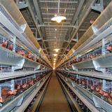 H tapent la cage de poulet de volaille de couche pour la ferme avicole