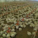 Poultry Farming Equipment for Broiler Production