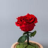 La promoción preservó la flor en el vidrio para el regalo de la tarjeta del día de San Valentín