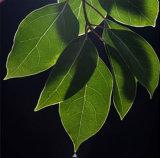 Borneol natural 464-43-7 da pureza D de 96% para o sabor e o Frgrance