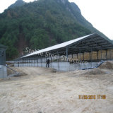 Direct From Factory Ensemble facile Structure en acier Bâtiment de ferme de poulet
