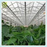 Estufa solar agricultural do sistema hidropónico