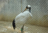 ステンレス鋼ロープの飼鳥園の網
