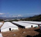 Construcción prefabricada barata de la granja/de viviendas de pollo de la estructura de acero