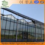 容易にMultispanのインストール済みガラス温室大きいガラス農業の