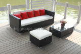 Mobilia & sofà esterni del patio (C805)