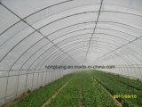 Shouguang Nongbang 온실과 정원 위드 매트