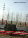 Torretta della trasmissione della sospensione di Megatro 110kv 1d1 Szk