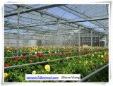 Plastikfilm-Gewächshaus mit Fabrik-Preis für Blumen