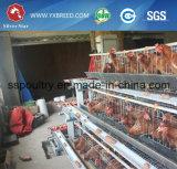 Gaiola de prata da galinha do equipamento das aves domésticas da tomada de fábrica da estrela
