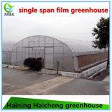 Casa verde da única extensão para a plantação vegetal