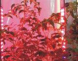 Energiesparende Extra-Dünne 400W hohe Leistung 80X5w LED wachsen Licht