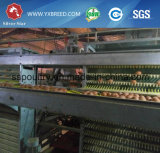 Тип горячая гальванизированная стальная клетка h машинного оборудования фермы для птицефермы