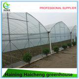 판매를 위한 중국 상업적인 이용된 온실
