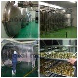 Bestes Preis-Cer nachgewiesene Vakuumfrost-Trockner-Maschine für Obst und Gemüse